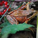 Frog and Red Berries by Jonice