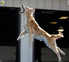Dogs Can Fly! by chimarieann