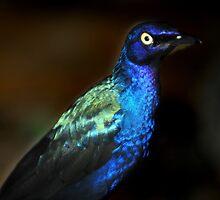 the purple starling by neil harrison