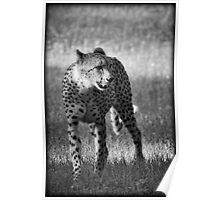 The Cheetah  Poster