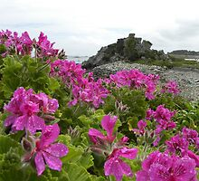 Blooming Isles of Scilly by Sarah Jane Bingham