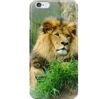 Lion I-Phone Case. iPhone Case/Skin