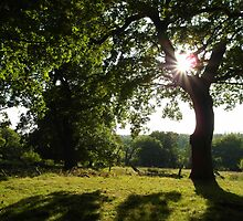 Richmond Park by blodauhyfryd