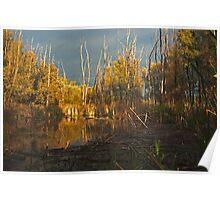 lake,sky,trees Poster