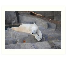 Polar Bears at the Brookfield Zoo Art Print