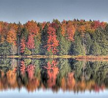 Fall Reflection at Bloody Pond - Willet, NY   USA by Edith Reynolds