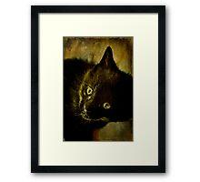 Maui the Cat Framed Print
