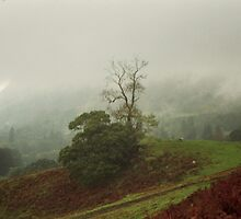 Misty Tree in The Mountains by Thomas Martin