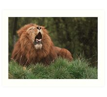 Lion Yawning Art Print