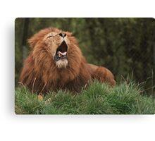 Lion Yawning Canvas Print