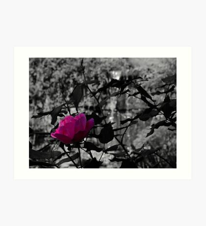 Selective Colored Rose Art Print