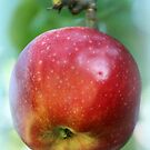 An Apple a Day ... by karina5