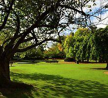 Autumn In The Park by SparklesDarkly