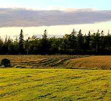 New Mown Hay on Prince Edward Island by Peggy Berger