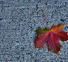Irish Autumn by Denise Abé
