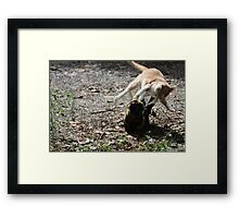 Annie Oakley Kitty Vs Wild Bill Hickock Kitty  Framed Print