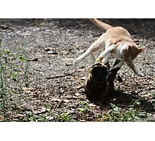 Annie Oakley Kitty Vs Wild Bill Hickock Kitty  Photographic Print