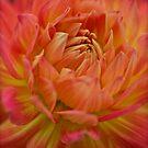 Wonderful orange Dahlia. by Andrzej Goszcz. Views (53) thank you ! by © Andrzej Goszcz,M.D. Ph.D