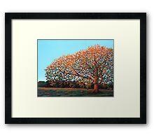 Compton Oak at Dawn Framed Print