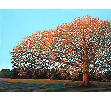 Compton Oak at Dawn Photographic Print