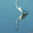 Horicon marsh Egret by Dan Wagner