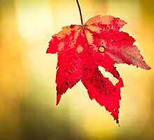 Hello Fall! by Th3rd World Order