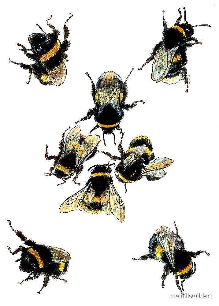 Bumble bees by melhillswildart