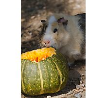 halloween for guinea pig Photographic Print