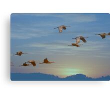 Winging Into The Sunset Canvas Print