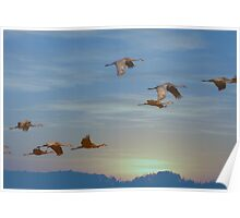 Winging Into The Sunset Poster