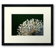 Mystery Plant Framed Print