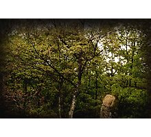 Blend Into Nature Photographic Print