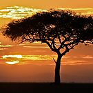 African Sunrise by Jill Fisher