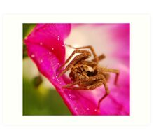 wolf spider and morning glory Art Print