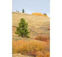 Kenosha Pass Hillside  Photographic Print