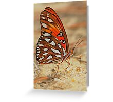 Fritillary III Greeting Card