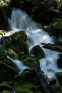 Mossy Cascades - Clearwater River by Harry Snowden