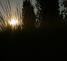 Prairie Sun by TacoWorks