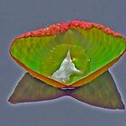 Curved Lilly Pad by Cynthia48