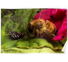 Studio Shot: Bee & Shield Bugs (nymph) Poster