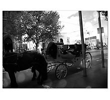 Carriage and Horse Photographic Print
