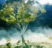 On a misty morning - Gum tree in the high country. by Janice E. Sheen