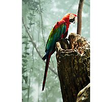 The Parrot Photographic Print