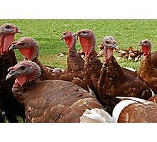 """""""Hey I Hear Thanksgiving is Coming Soon!"""" Photographic Print"""