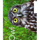 iOwl - iPhone Case by Adam Gormley