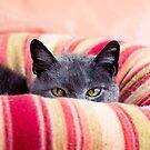 Peeking Over by Josie Eldred