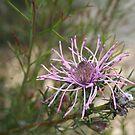 Weird Spider Like Flower by Jason Scott