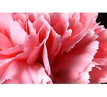 Carnation Magic Photographic Print
