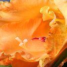 Cornucopia Florale by SmoothBreeze7