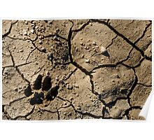 Animal footprint in cracked mud surface Poster